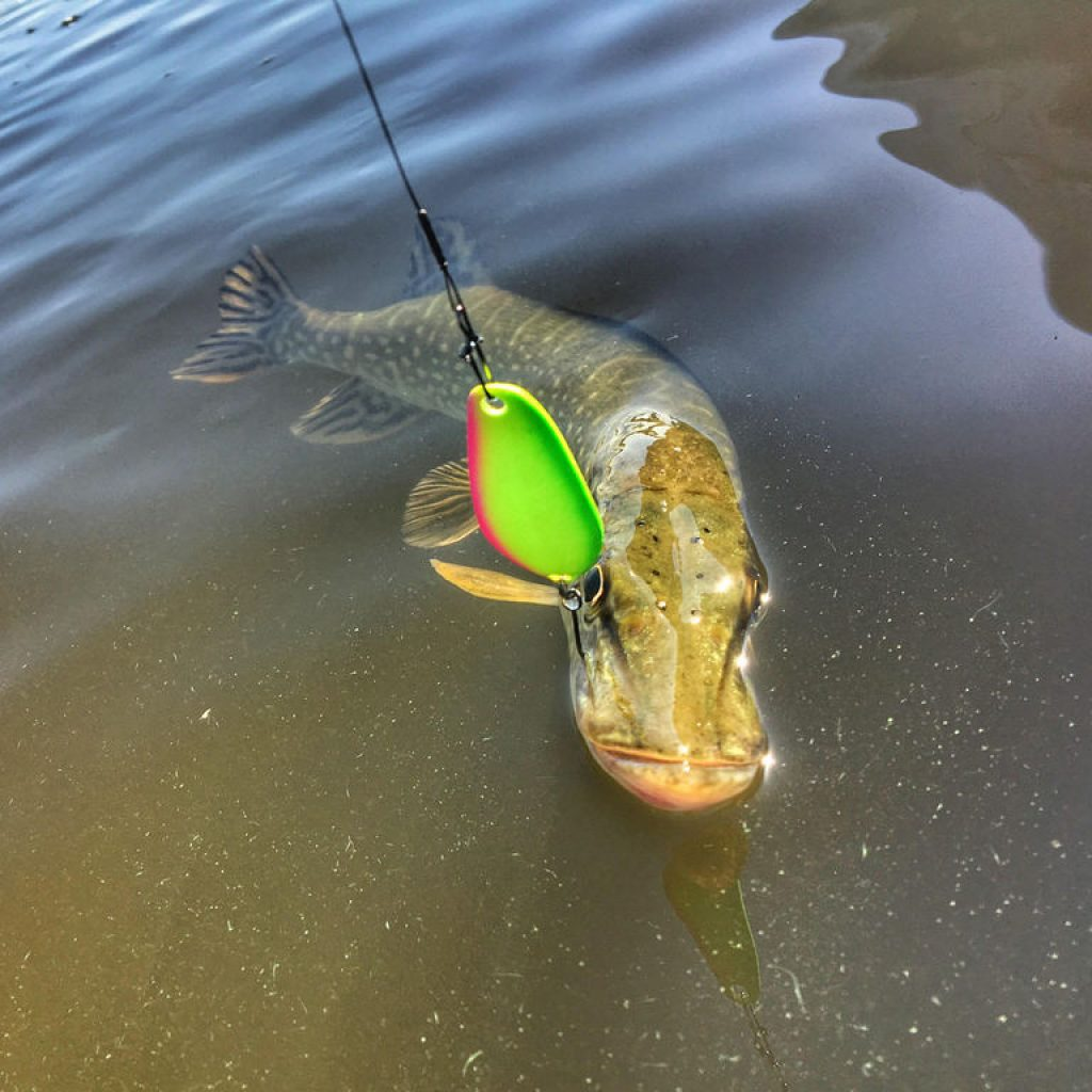 Ловля щуки на блесны SV FISHING LURES модель KOKETKA